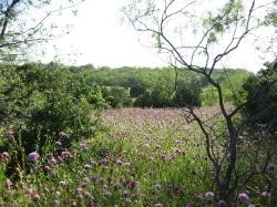 Talala Trail, Cedar Hill State Park