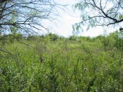 Dorba Trail, Cedar Hill State Park