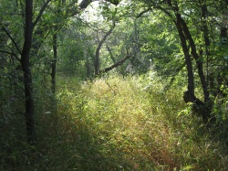 The trails of Cedar Hill State Park